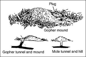 gopher v mole mound