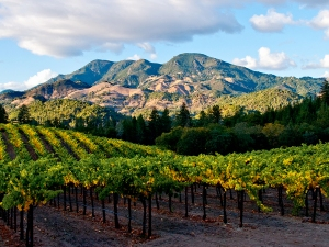 I'm lucky to live in the Napa Valley, and the Fall is a great time for photography here; Fall colors, clouds, Mt. St. Helena in the background.